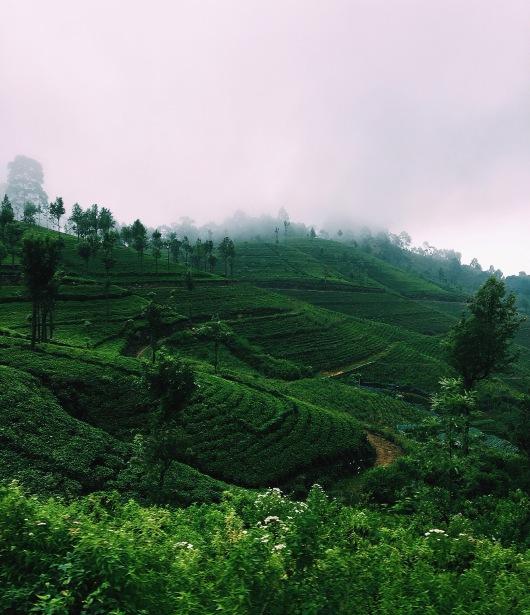 Sri Lankan Highlands