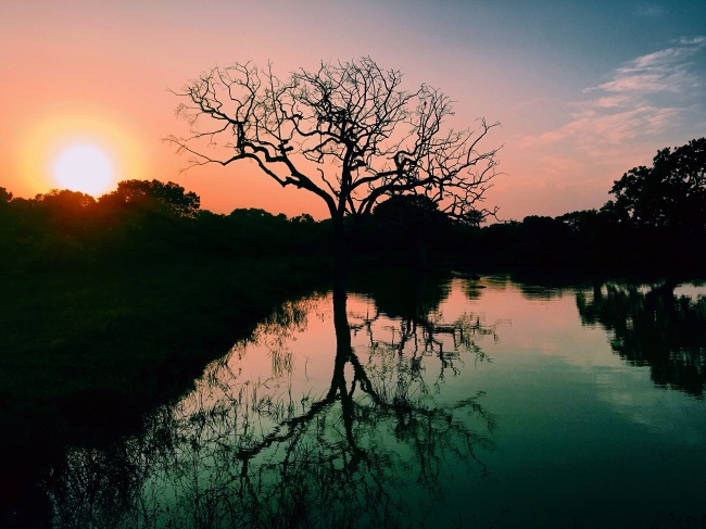 Sunrise at Yala National Park